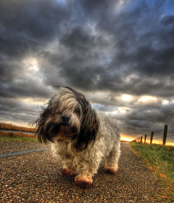 HDR Dog by ~SEKArt